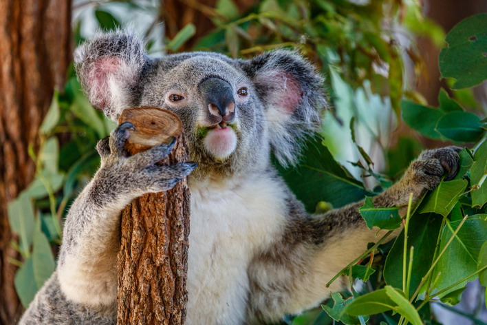 How to Help the Bushfire Affected Critters