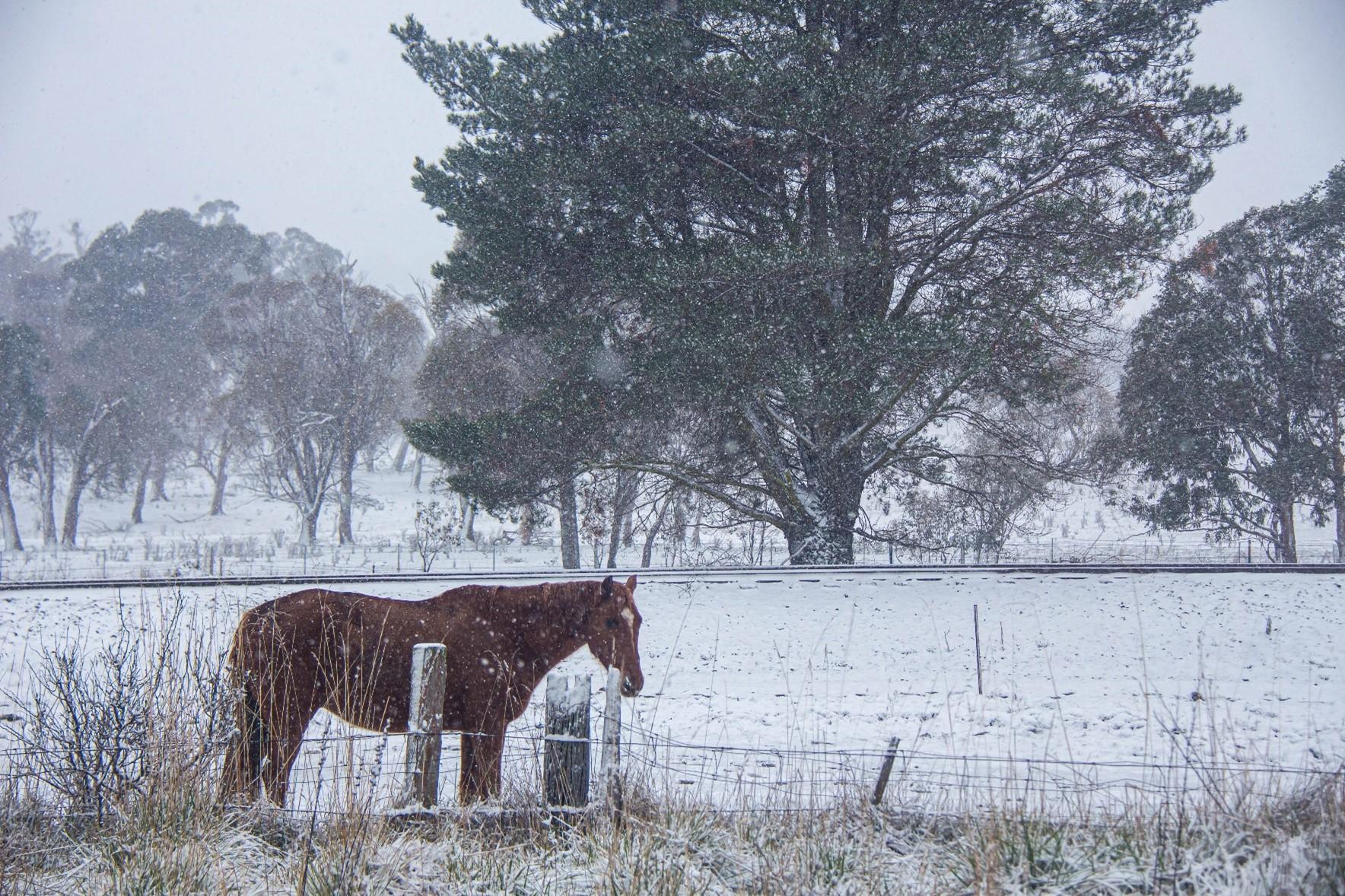 snow-landscape-guyra-2